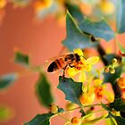 Buzzin&#x27; Bee  by Janette  Kimbrough