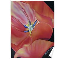 Tulip Poster