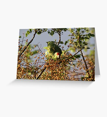 Wild Parrot Eating Berries Greeting Card