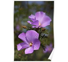 Purple flower with five petals - closeup Poster