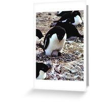 Aelelie Penguins in the Rookery Greeting Card