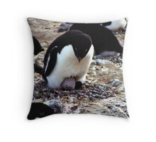 Aelelie Penguins in the Rookery Throw Pillow