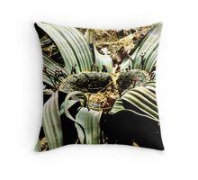 Welwitschia Plant Throw Pillow
