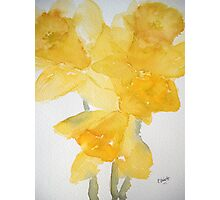 Awash with Daffs Photographic Print
