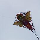 Kite by Aler