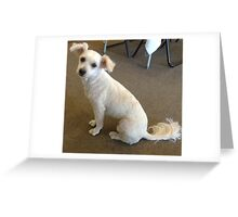 A Lovable Little Dog. Greeting Card