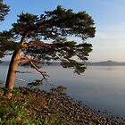 Lake in Killarney National Park by Babsy