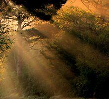 Sunrays by Babsy