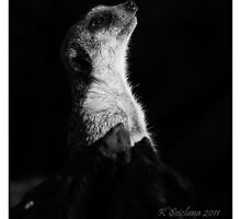 Meerkat in the shadow b/w 2 by bluetaipan