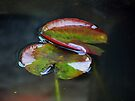 Lily Pads by Nevermind the Camera Photography