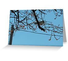 Streetlight Branches Greeting Card