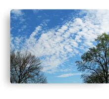 Trees Framing the Sky Canvas Print
