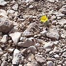 Rocks 'n Flower by thetea