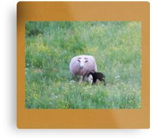 Wall of Compassion Metal Print