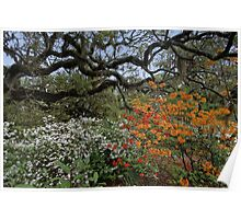 Brookgreen Gardens - Oaks and Flowers Poster