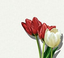 Tulip Trio by Helmar Designs