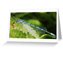 Blue Boy Greeting Card