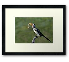 'Insect......icide' Framed Print