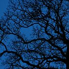 tree sihouette on royal blue night sky by linea004
