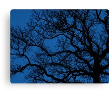 tree sihouette on royal blue night sky Canvas Print