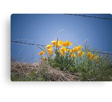Spring Popping Up Canvas Print