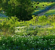 Springtime in Texas by Charmiene Maxwell-batten