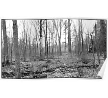 BW  WALK IN THE DEER WOODS Poster