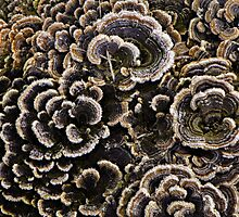 Frost on fungi by Robin Simmons