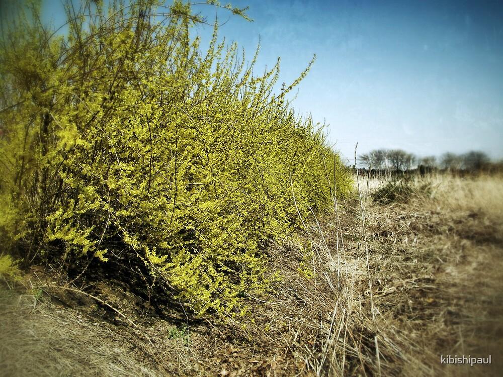 The Tide of Spring by kibishipaul