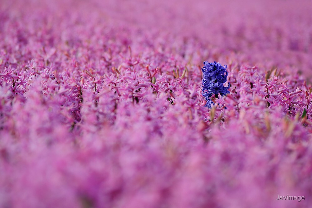 Purple problem in pink by Javimage