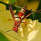 strange wasp by Manon Boily
