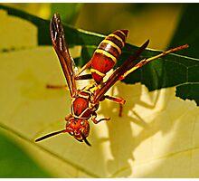 strange wasp Photographic Print