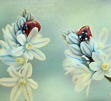 Ladybirds... by Ellen van Deelen