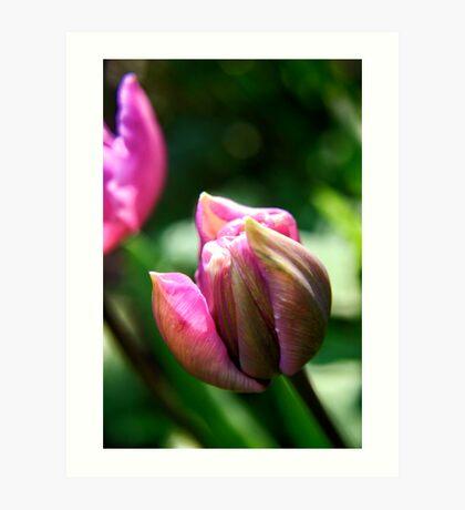 Spring Tulip Flower Art Print