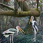 Painted Storks by DonMc