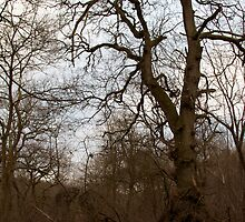 Midger Trees  by DanielUnderhill