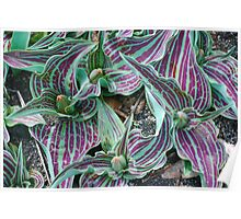 Purple and Green Stripes Poster