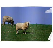 Sheep! Poster