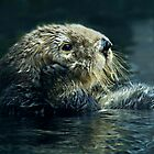 """I ""Otter"" Be In Pictures""  by Gail Jones"