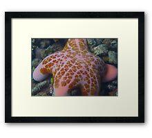 Spongebob Starfish Framed Print