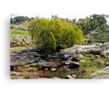 Weeping Willow Tree at Pyalong Canvas Print