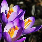 Purple and Orange by Heather Crough