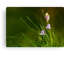 The First Bluebells Canvas Print