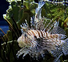 Lion Fish by Sharon Batdorf
