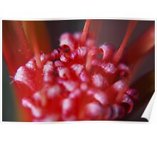 Autumn Red Flower in macro Poster