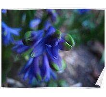 Hyper Hyacinth Poster