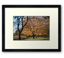 The Trees Framed Print