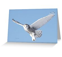 Independance Greeting Card