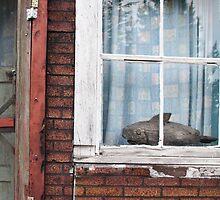 Wooden Fish Window by Rod J Wood
