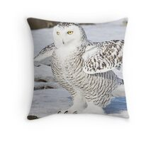 Strutting her stuff Throw Pillow